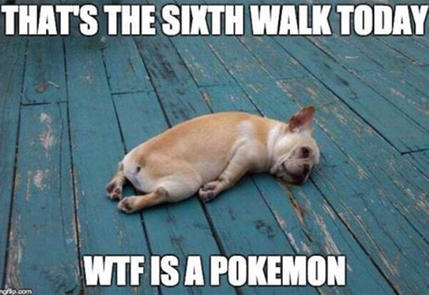 funny_pokemon-go-dog