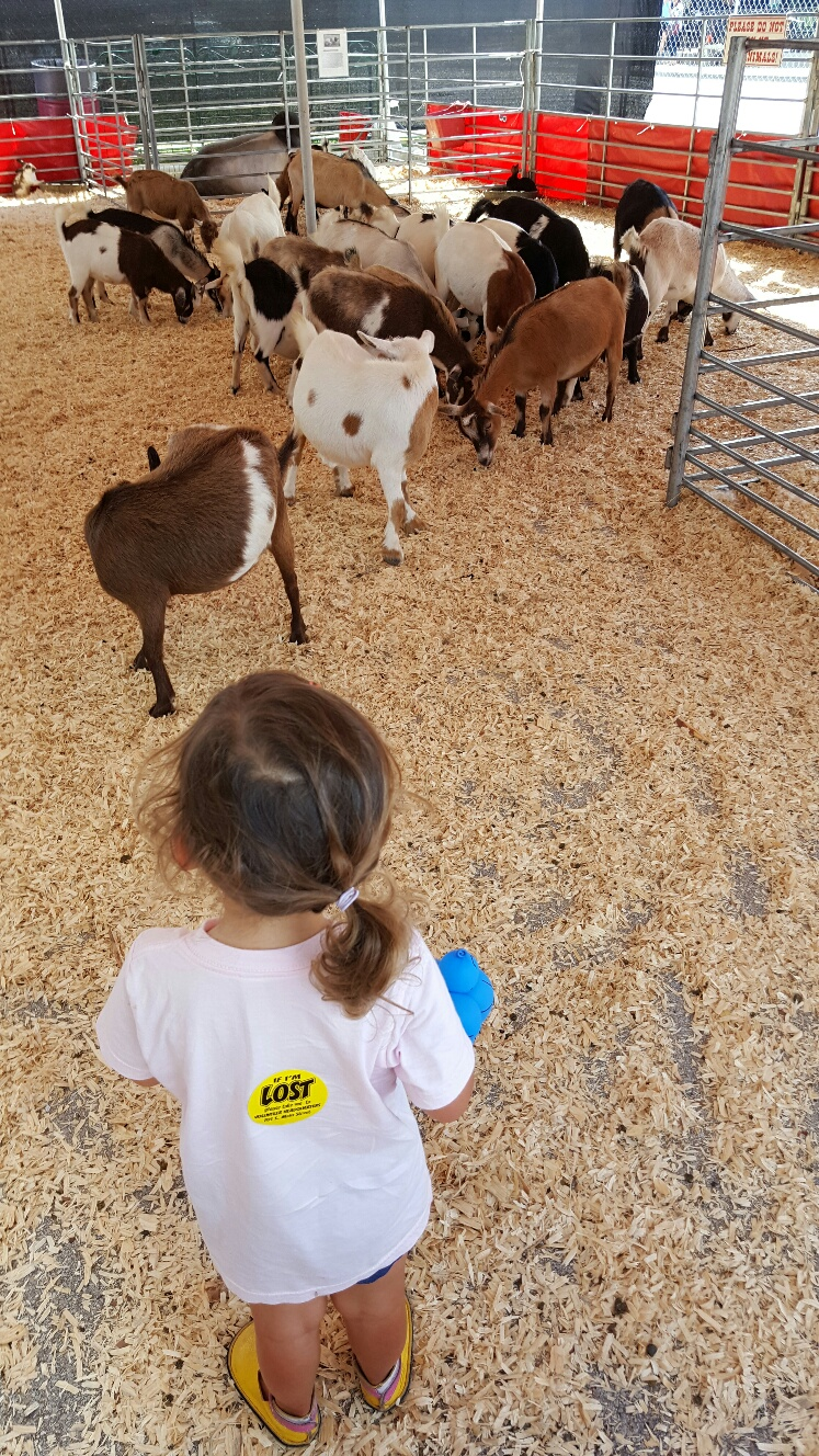 surrounded-by-goats-at-petting-zoo